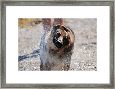 German Shepherd Shake Framed Print by DejaVu Designs