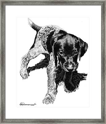 German Shorthair Framed Print by Rob Christensen