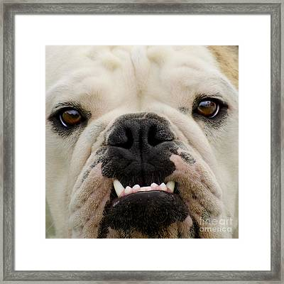 Get A Load Of These Framed Print by Linsey Williams
