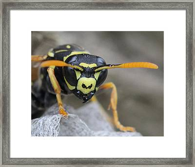 Get Away From Me Framed Print by Bruce  Morrell