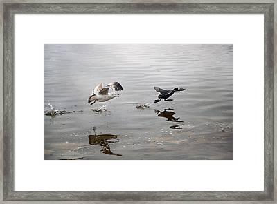 Get Back Here.... Framed Print by Steven  Michael