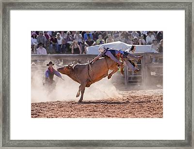 Get Bucked IIi Framed Print by Michelle Wrighton