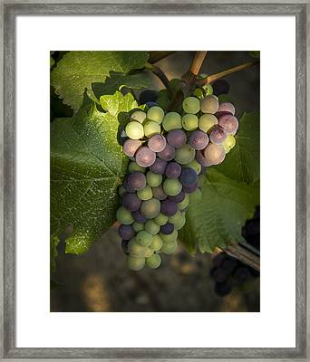 Getting Ripe Framed Print by Jean Noren
