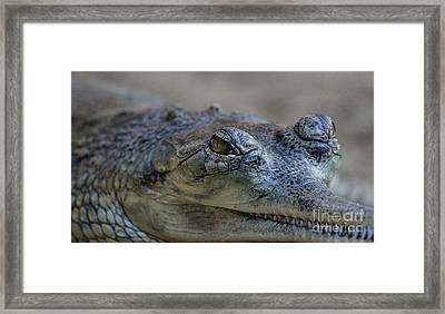 Gharial Smile Framed Print by Ruth Jolly