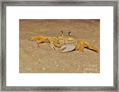 Ghost Crab Framed Print by Lynda Dawson-Youngclaus