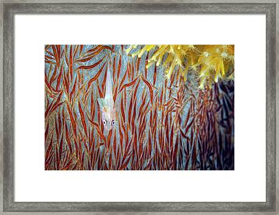 Ghost Goby Framed Print by Ethan Daniels