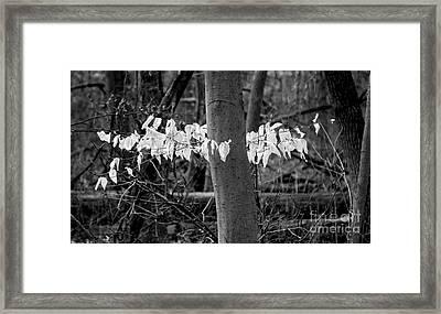 Ghost Leaves Framed Print by Steven Ralser
