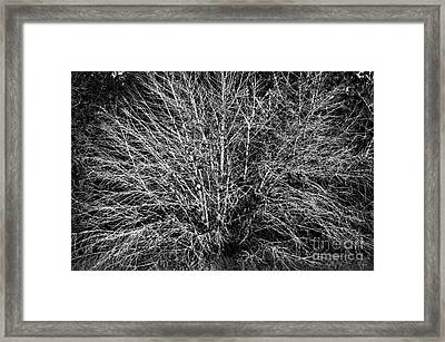 Ghost Trees Monochrome Framed Print by Gary Richards
