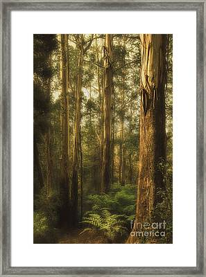 Ghostly Framed Print by Andrew Paranavitana