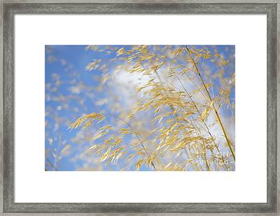 Giant Feather Grass Framed Print by Tim Gainey