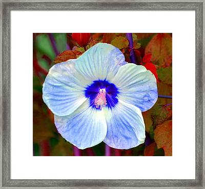 Giant Hibiscus Framed Print by Deena Stoddard