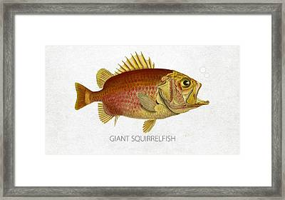 Giant Squirrelfish Framed Print by Aged Pixel