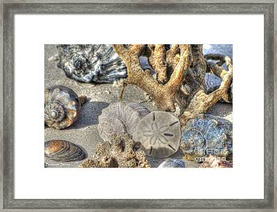 Gifts From The Sea Framed Print by Benanne Stiens