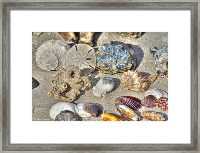 Gifts Of The Tides Framed Print by Benanne Stiens