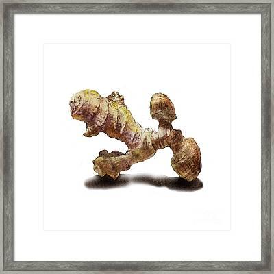 Ginger   Framed Print by Irina Sztukowski