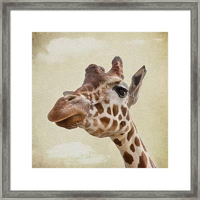 Giraffe Close Up Framed Print by Svetlana Sewell