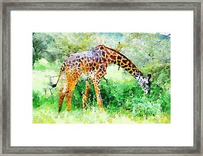 Giraffe Eating Grass Painting Framed Print by George Fedin and Magomed Magomedagaev
