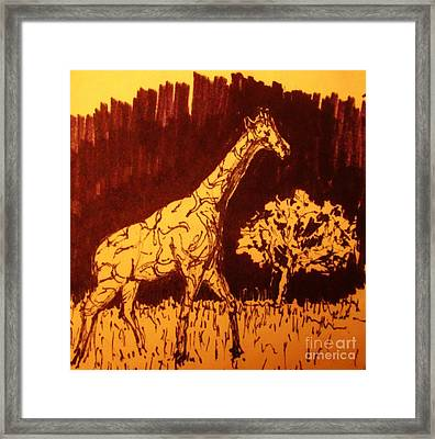 Giraffe  In Habitat Framed Print by John Malone