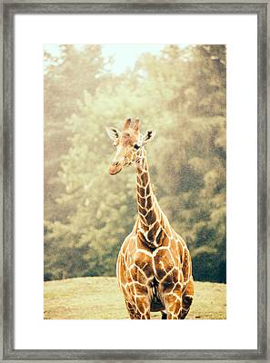 Giraffe In The Rain Framed Print by Pati Photography