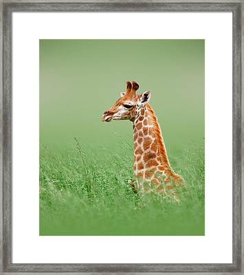 Giraffe Lying In Grass Framed Print by Johan Swanepoel