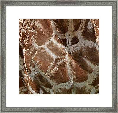 Giraffe Patterns Framed Print by Dan Sproul