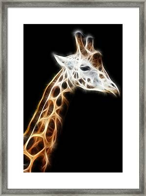 Giraffe Portrait Fractal Framed Print by Pati Photography