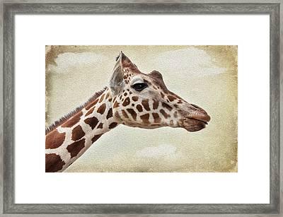 Giraffe Framed Print by Svetlana Sewell