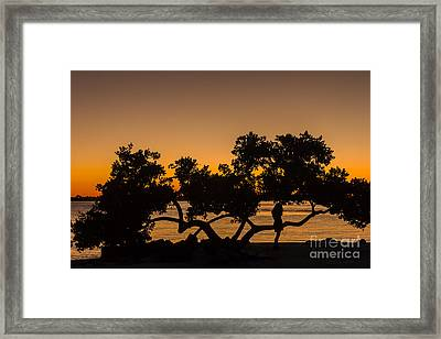 Girl And Tree Framed Print by Marvin Spates
