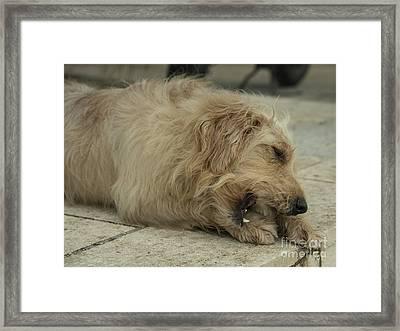 Give A Dog A Bone  Framed Print by Rob Hawkins