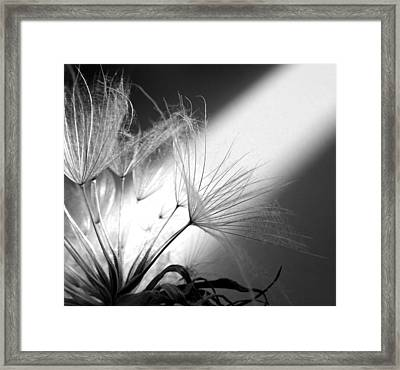 Give Me Light... Give Me Life Framed Print by Marianna Mills