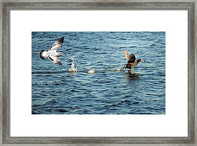 Give Me That... Framed Print by Steven  Michael