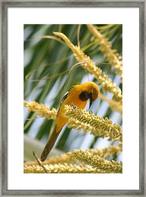Giving Thanks Framed Print by Paula Brown