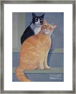 Gizmo And Haole Framed Print by Karol Wyckoff