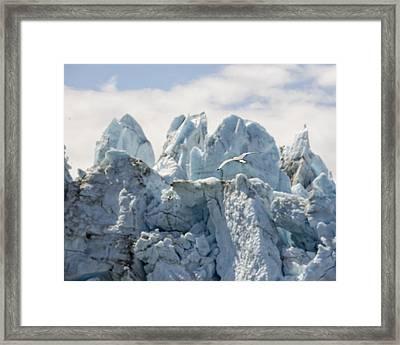 Glacial Flight Framed Print by Vicki Jauron