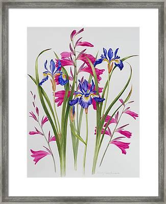 Gladiolus And Iris Sibirica Framed Print by Sally Crosthwaite