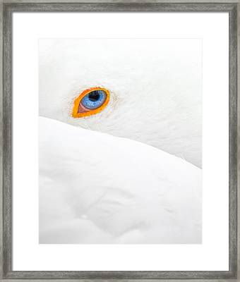 Glance Framed Print by Jean-luc Besson
