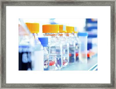 Glass Bottles In A Row Framed Print by Wladimir Bulgar