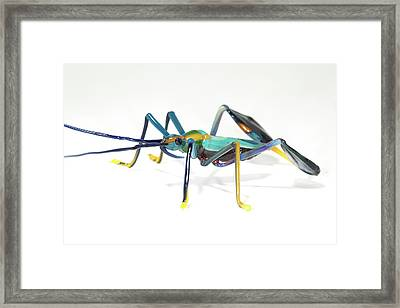 Glass Insect Framed Print by Tomasz Litwin
