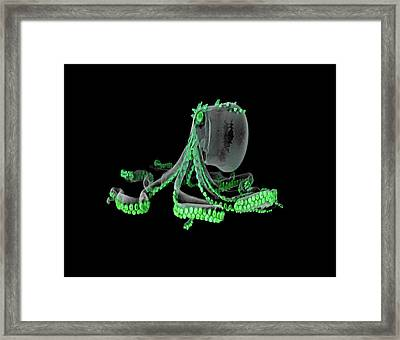 Glass Octopus Model Framed Print by Dan Sykes/natural History Museum, London