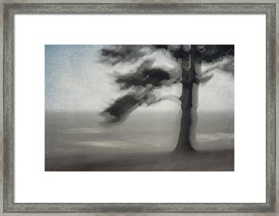 Glimpse Of Coastal Pine Framed Print by Carol Leigh
