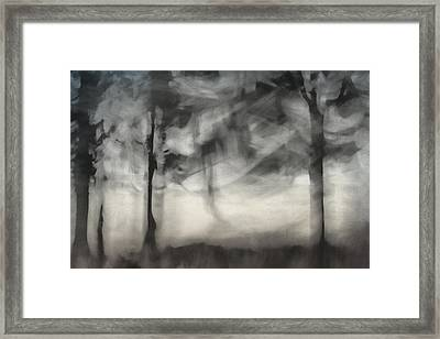 Glimpse Of Coastal Pines Framed Print by Carol Leigh