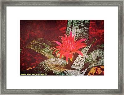 Glorious And Splendid Framed Print by Sandra Pena de Ortiz