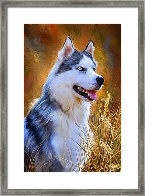 Glorious Pride - Siberian Husky Portrait Framed Print by Lourry Legarde