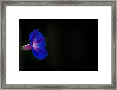 Glorious Simplicity Framed Print by Cheryl Baxter