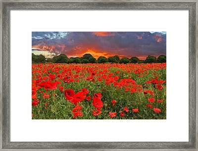 Glorious Texas Framed Print by Lynn Bauer