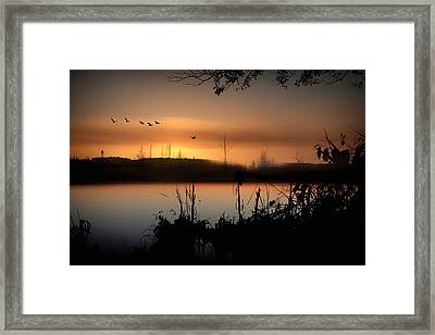 Glow Of The Forest Framed Print by Gary Smith