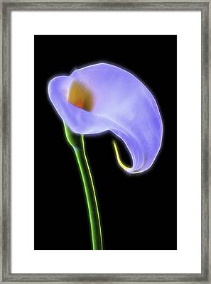 Glowing Calla Lily Framed Print by Garry Gay