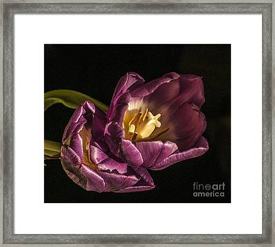 Glowing Glory Framed Print by Terry Rowe