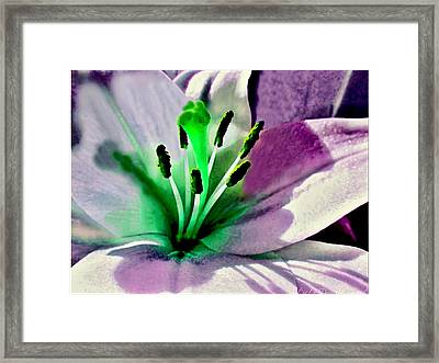 Glowing Lily Heart  Framed Print by Danielle  Parent