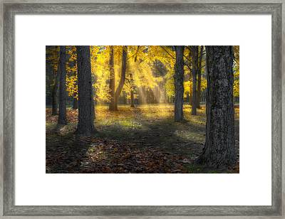 Glowing Maples Framed Print by Bill Wakeley